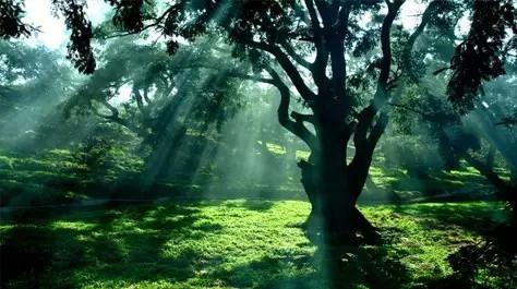 壁纸 风景 森林 桌面 474_265