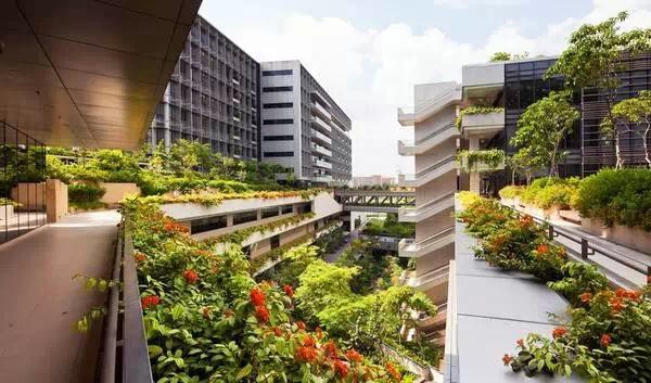 三座大楼连接着8个屋顶花园,五层绿化走廊和81个花园阳台.